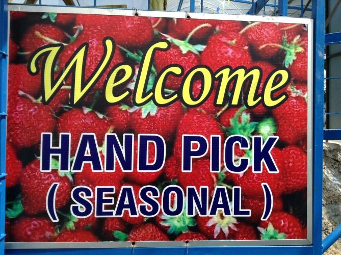 Buah strawberi di Cameron Highland