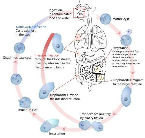 bagaimana toksin terjadi dalam badan