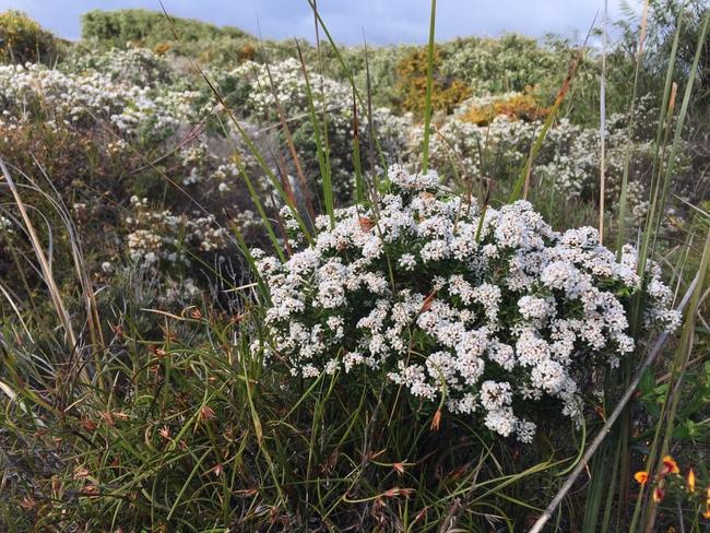 Spesies bungan di WIndfarm Albany